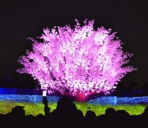 iluminación-en-parque
